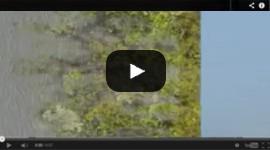 video-01